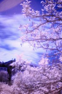 infrarot_07